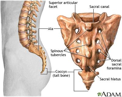 Osteopathie sur colonne vertebrale