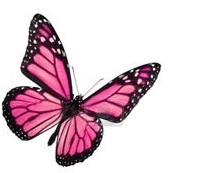 Osteopathie douce comme un papillon